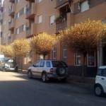 AIB denuncia el estado de los árboles de la calle Las Garcitas