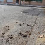 El PP alerta del peligro de circulación en la calle Paquita Torres