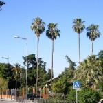 17. Vínculo histórico entre Bailén y Sevilla