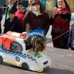 Más de una veintena de mascotas participan en el desfile de Carnaval