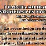 Marcha solidaria para la esterilización de gatos